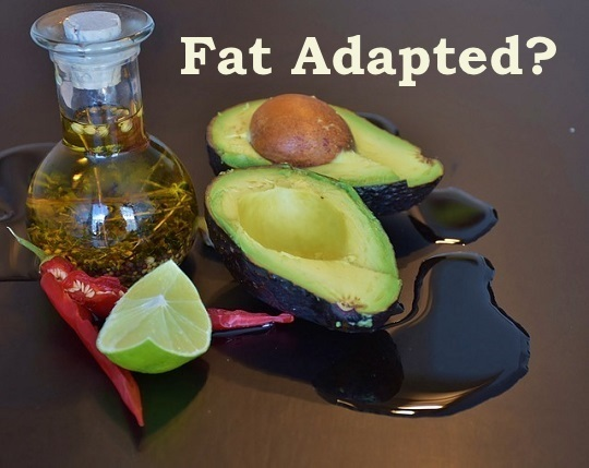 fat adapted, keto